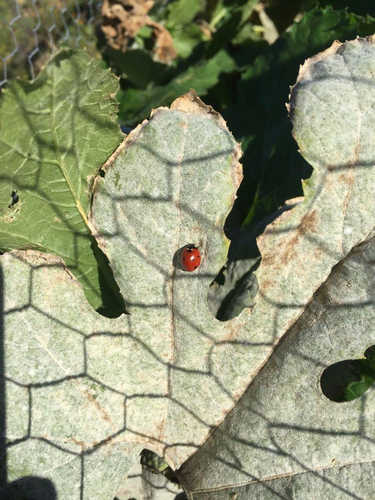IMG_9244_ladybug_1200