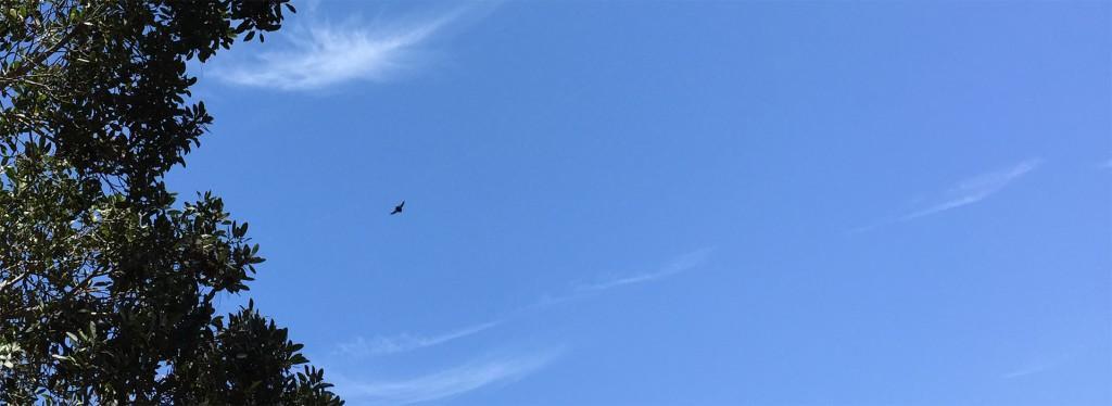 bird-flown-1918x700