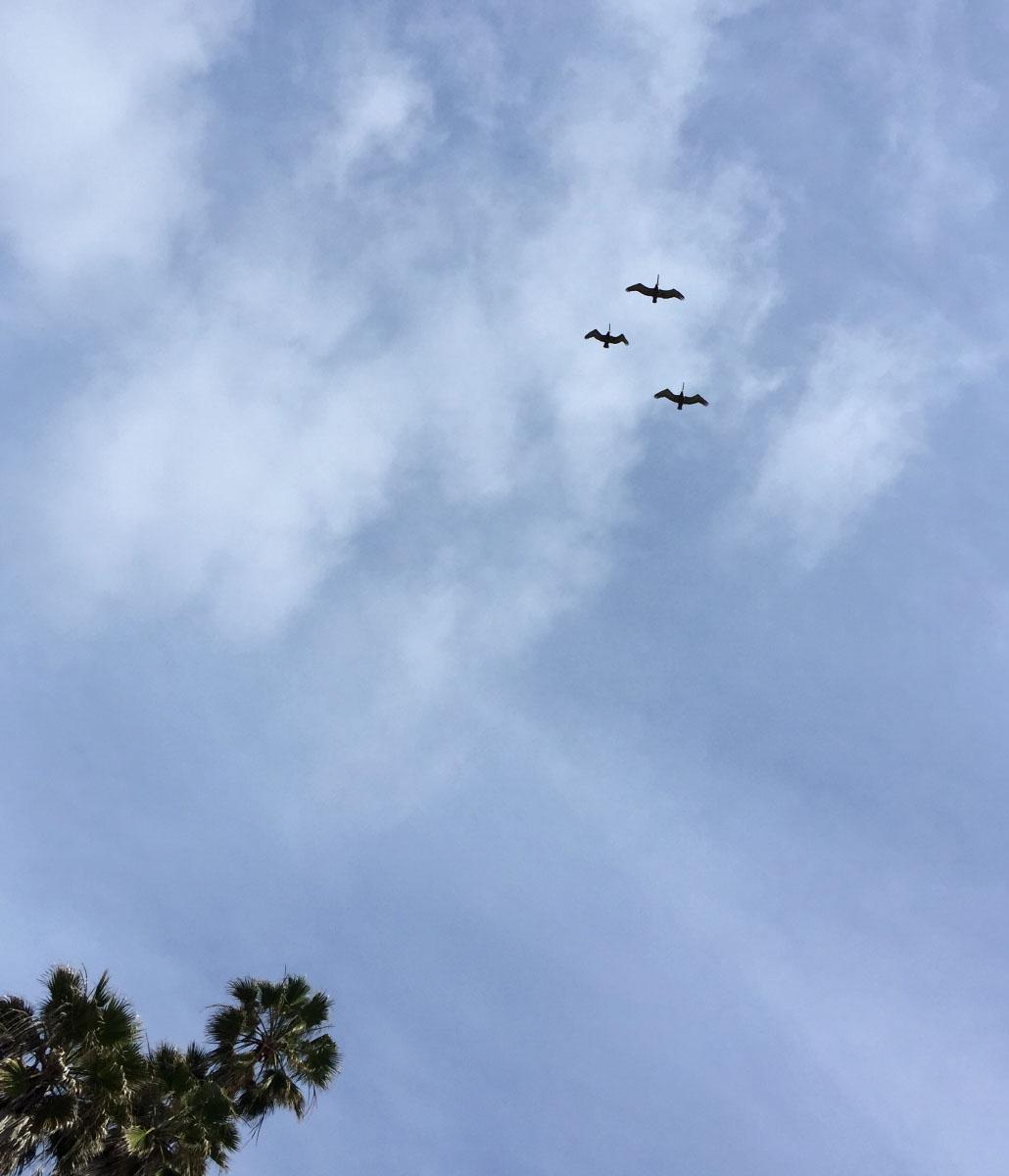 flying-pelicans_1200h