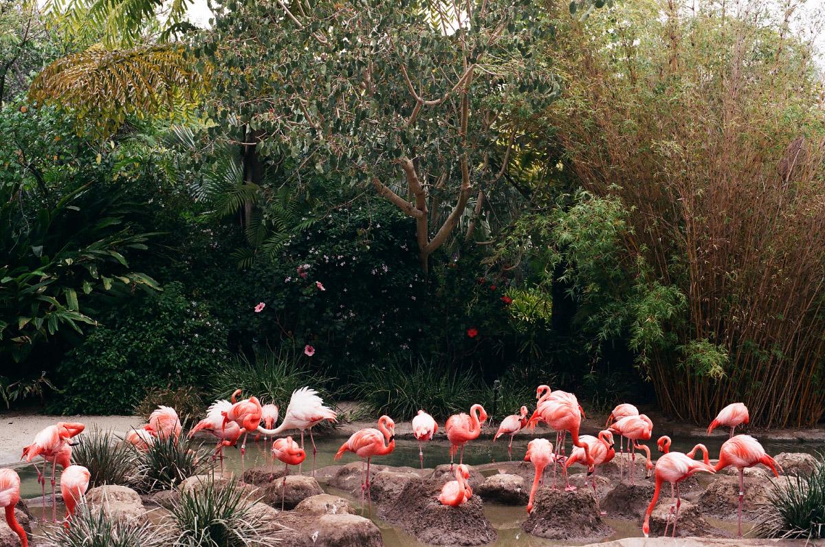 99690021_flamingoes_1200