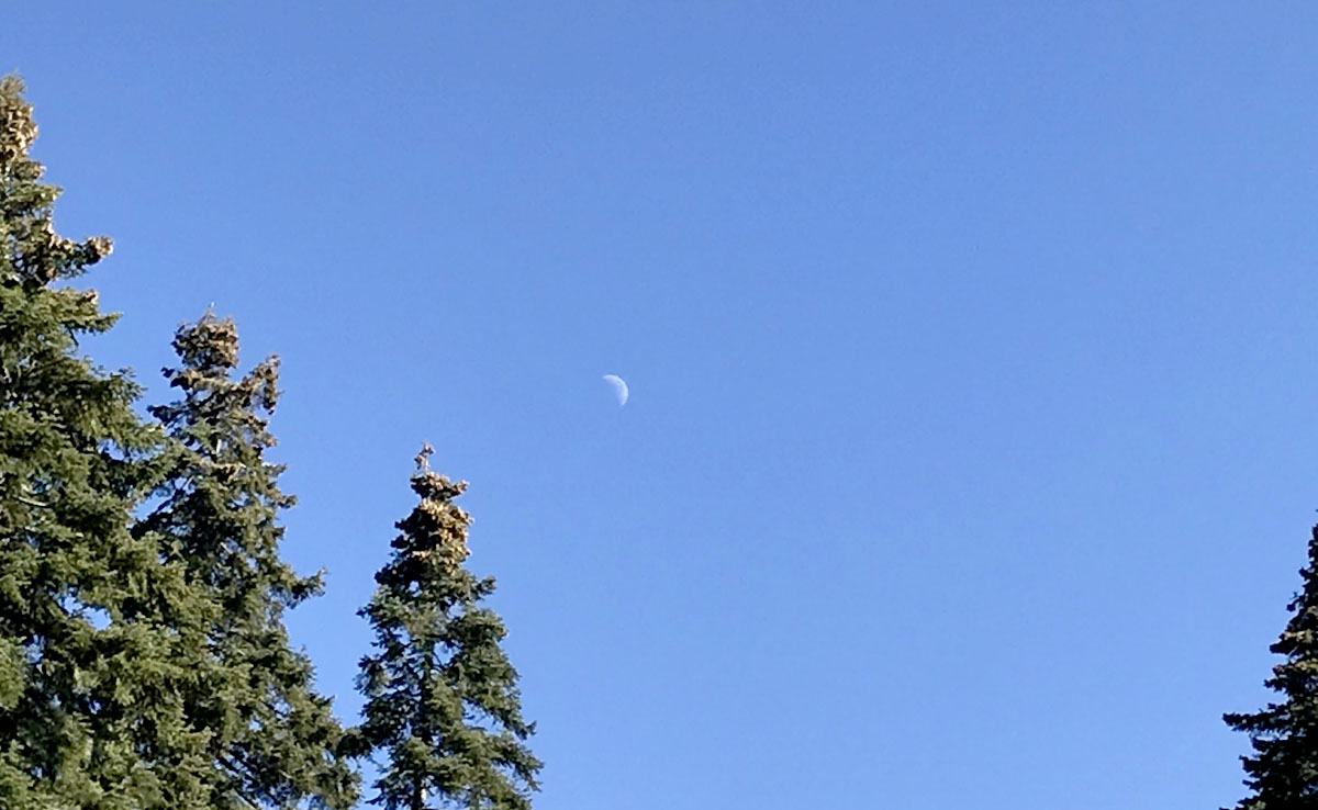 Pine Moon image