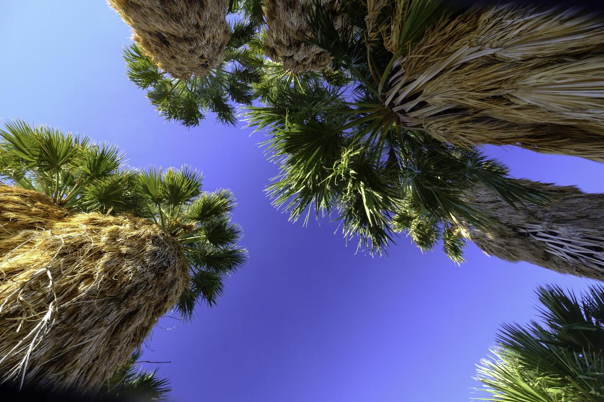 Desert Palm Oasis, by Eric Platt ©2018