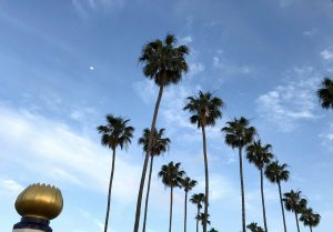 Swamis Tower Palms Moon image