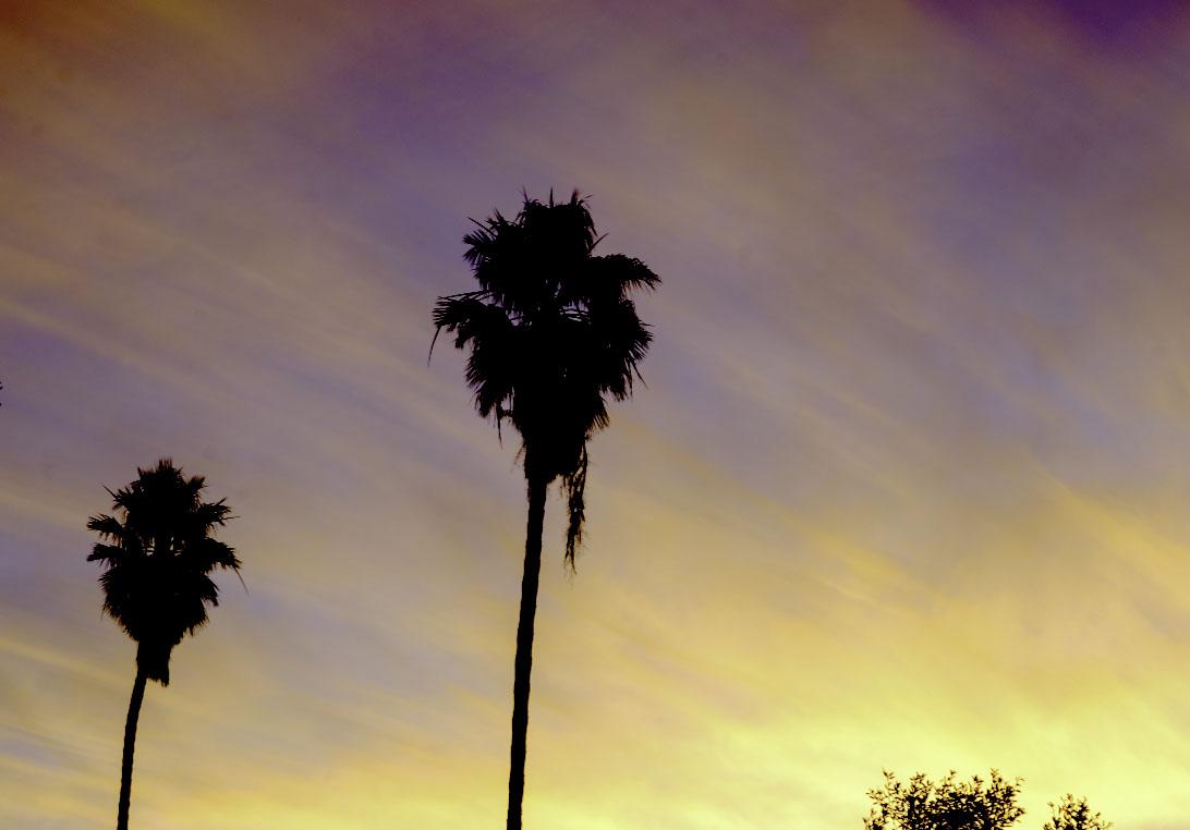 Sunrise With Two Palms ©2019 Eric Platt