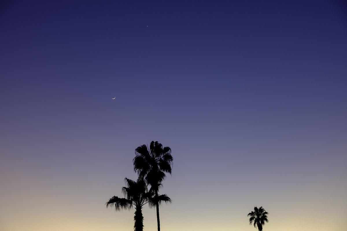 """Palm Moon Venus"" ©2020 Eric Platt"